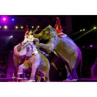 Тульский цирк. Шоу слонов